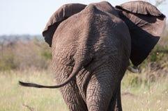 Elefants tillbaka slut Arkivfoto