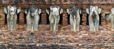 Elefants on the wall Royalty Free Stock Image
