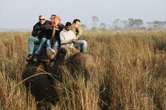 elefantsafari Arkivbild