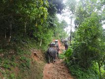 Elefantsafari i den pittoreska Dao Pak Park i Thailand arkivfoto