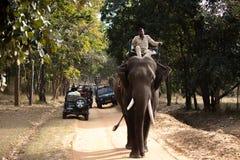 Elefantsafari i en nationalpark royaltyfri foto