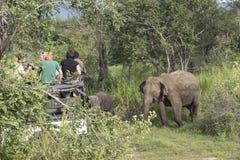 Elefantsafari i Polonnaruwa, Sri Lanka Royaltyfria Bilder