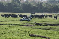 Elefantsafari i Sri Lanka Royaltyfri Fotografi