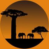 elefantsavanna Arkivfoto