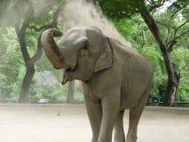 Elefantschmutzdusche Stockbild