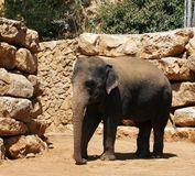 elefantshow Royaltyfri Foto