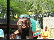Elefantshow arkivbild