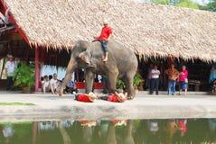 Elefantshow arkivfoto