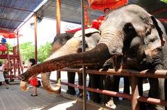 Elefantshow stockfoto