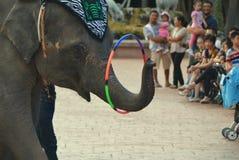 Elefantshow Stockfotos