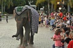 Elefantshow Stockfotografie