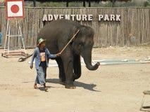 Elefantshow Fotografering för Bildbyråer