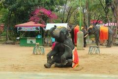 Elefantshow Royaltyfri Bild