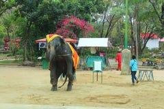 Elefantshow Royaltyfria Bilder