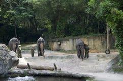 Elefantshow i den Singapore zoo Royaltyfri Bild