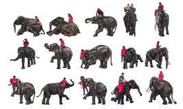 Elefantshow och utbildning med mahouten royaltyfri illustrationer