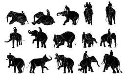 Elefantshow och utbildning med mahouten vektor illustrationer
