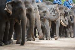 Elefantshow och utbildning med mahouten Lampang Thailand Royaltyfri Foto