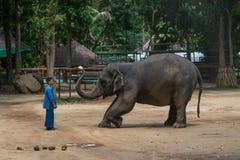 Elefantshow på den thailändska elefantbeskyddmitten Arkivbilder