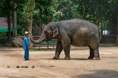 Elefantshow på den thailändska elefantbeskyddmitten Royaltyfria Foton