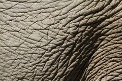 elefantskinn arkivfoto