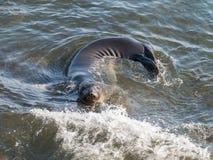 Elefantskyddsremsa som att närma sig kusten arkivfoton