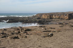 Elefantskyddsremsor på den Kalifornien stranden arkivfoton