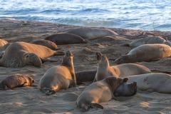 Elefantskyddsremsor på stranden Royaltyfri Foto