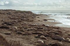 Elefantskyddsremsor på stranden Fotografering för Bildbyråer