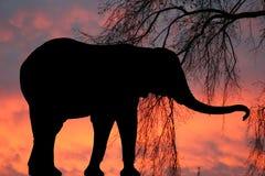 elefantsolnedgång royaltyfri fotografi
