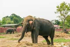 Elefantspiel ein Spaßstroh Stockfoto