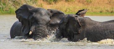 Elefantspiel im Wasser Stockbild