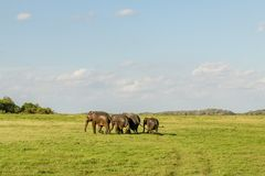 Elefantsportar Arkivbilder