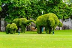Elefantstamträd arkivfoton