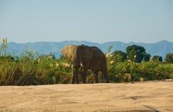 Elefantstier Stockfotos
