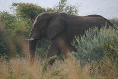 Elefanttarnung stockbild