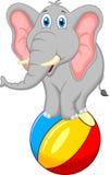Elefanttecknad filmanseende på en boll Royaltyfri Fotografi