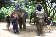 Elefanttraining und -reiten Stockfotos