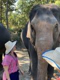 Elefanttreffen lizenzfreie stockfotografie