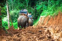 Elefanttrekking durch Dschungel in Nord-Thailand Lizenzfreie Stockfotografie