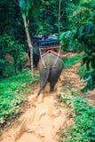 Elefanttrekking durch Dschungel in Nord-Thailand Stockbilder
