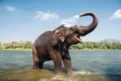 Elefanttvagning i floden Fotografering för Bildbyråer