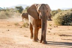 Elefantuppladdning royaltyfri bild