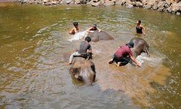 Elefantutbildning, fristad Fotografering för Bildbyråer