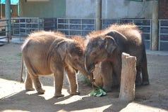 Elefantvän Fotografering för Bildbyråer
