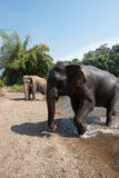 Elefantvärld Nord-Thailand Arkivfoto