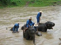 Elefantwäsche in Thailand Stockbilder