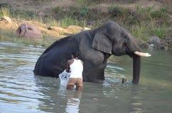 Elefantwash Royaltyfri Foto