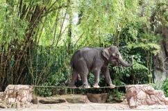 Elefantweg auf dem Drahtseil stockfoto