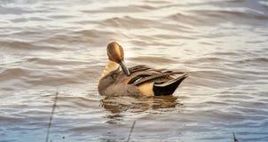Elegância na lagoa fotos de stock royalty free